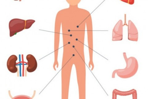 Pachet complet medicina interna: Consultatie + Ecografie abdominala totala + EKG: 219 lei