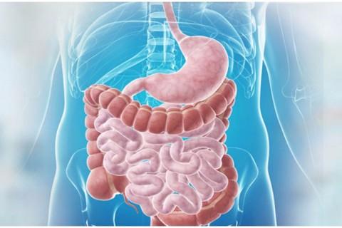 Consultatie gastroenterologie + ecografie abdomen total si reducere 43% la analizele uzuale