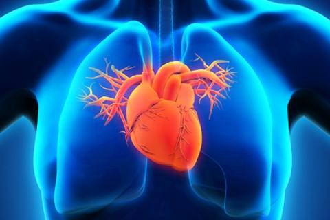 Consultatie Cardiologic + HOLTER EKG(24 ore) cu Interpretare