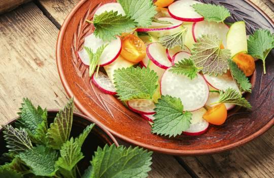 Urzica – cumul de proteine, vitamine și săruri minerale