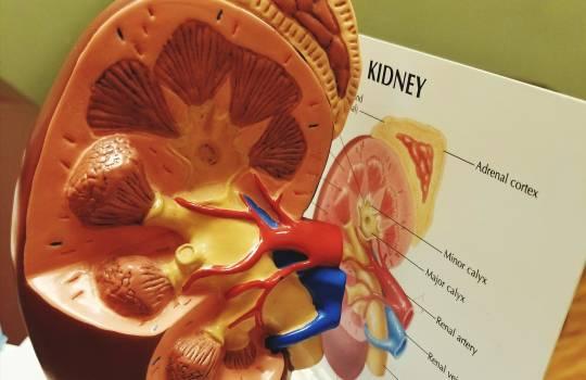 Cum îți dai seama că ai probleme cu rinichii